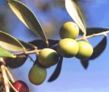 Aceite de oliva para cuidar tu vista