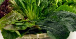 5 plantas que mejoran tus defensas